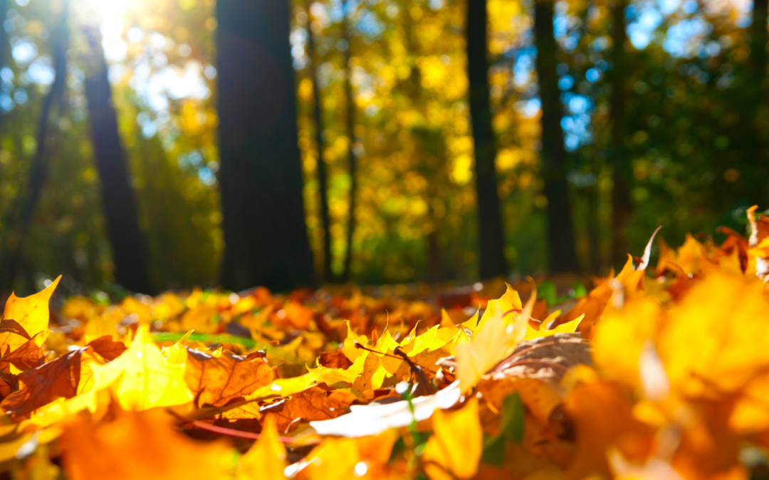 Fall Improvements: Top 10 Property Projects to Increase Your Value